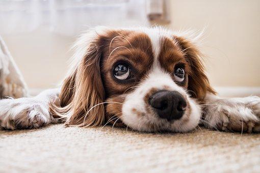 Maakt een hond gelukkiger?