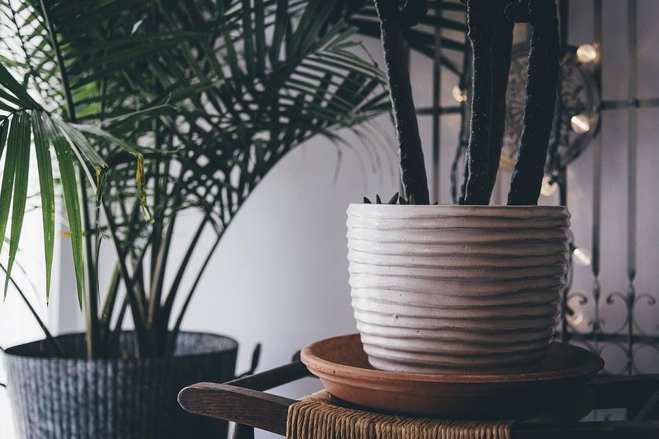 Een asiel voor planten? Ja, dat bestaat echt!