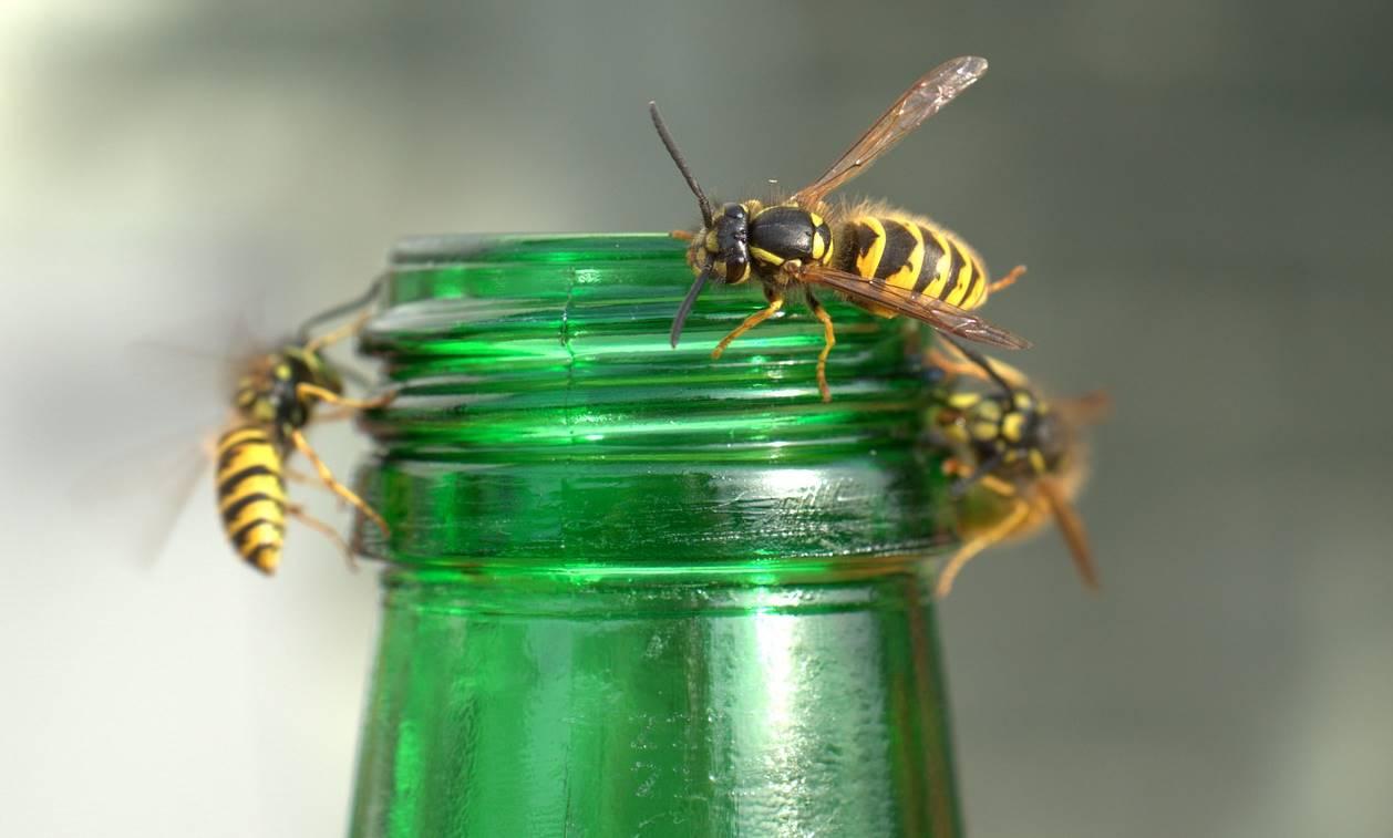 Last van wespen? Met deze zeven tips hou je ze uit de buurt!