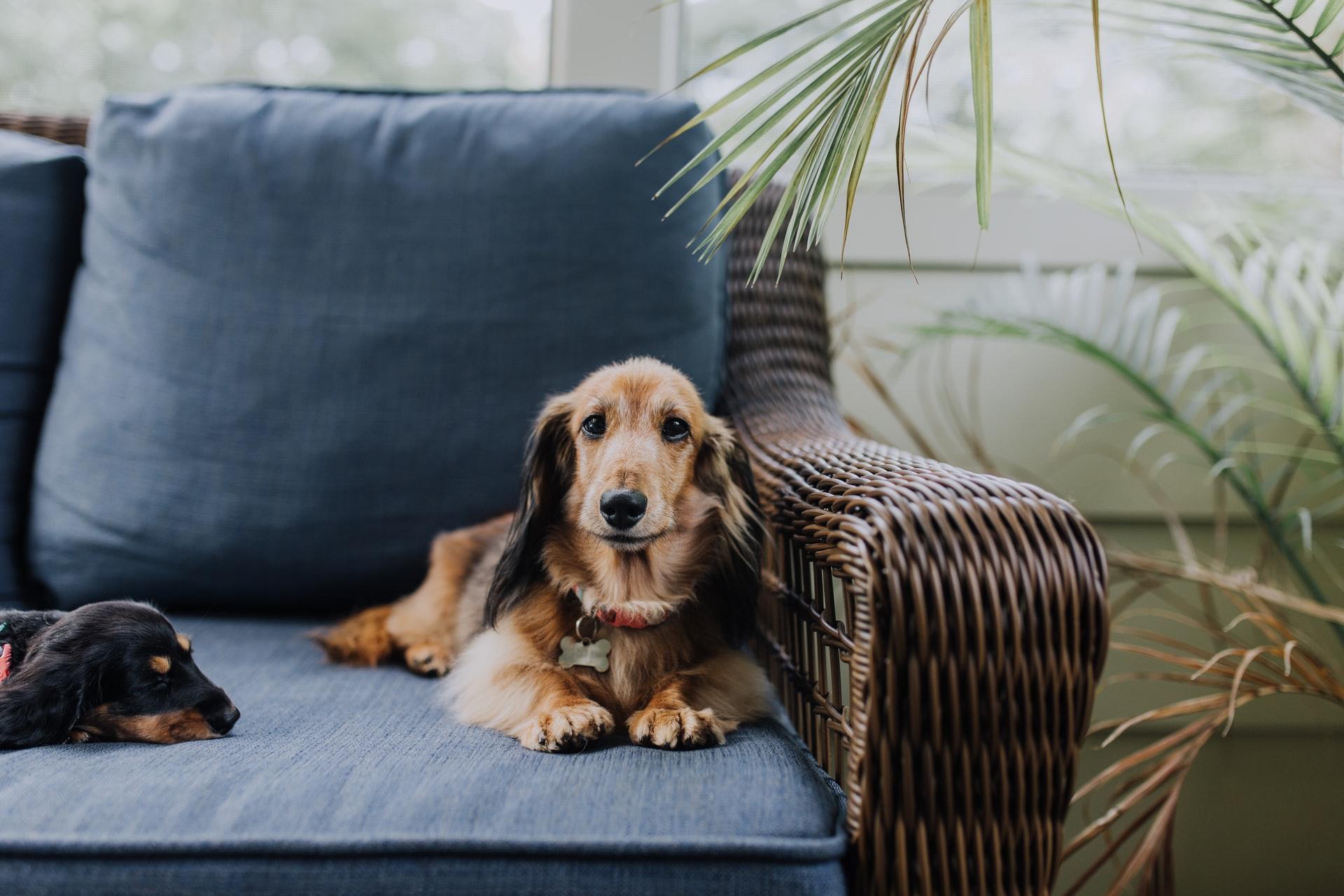 Hond in huis is een tikkie meer geluk